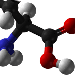 Where do the amino acids in Absorb Plus come from?