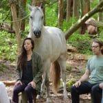 Horse Meditation Circle – New Healing Technique