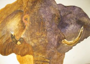 elephant-elderJPT
