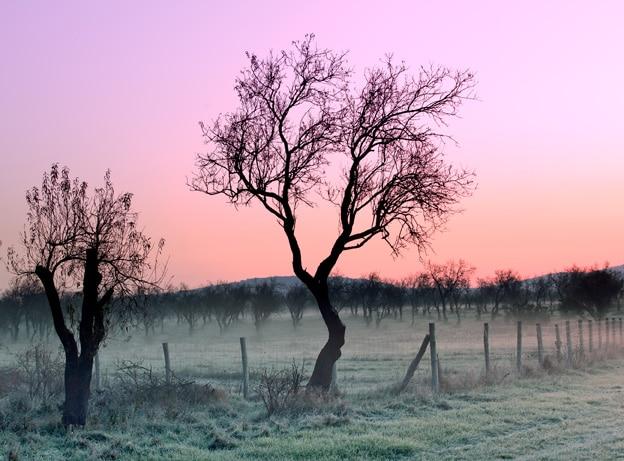 Microwave Radiation Killing Trees