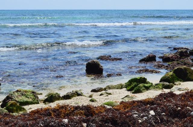 ocean-akumal