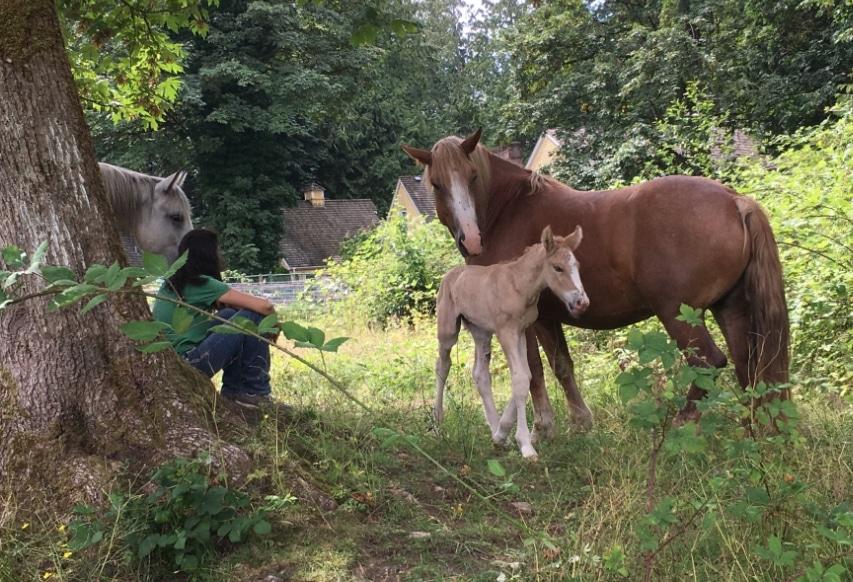 filly-herd