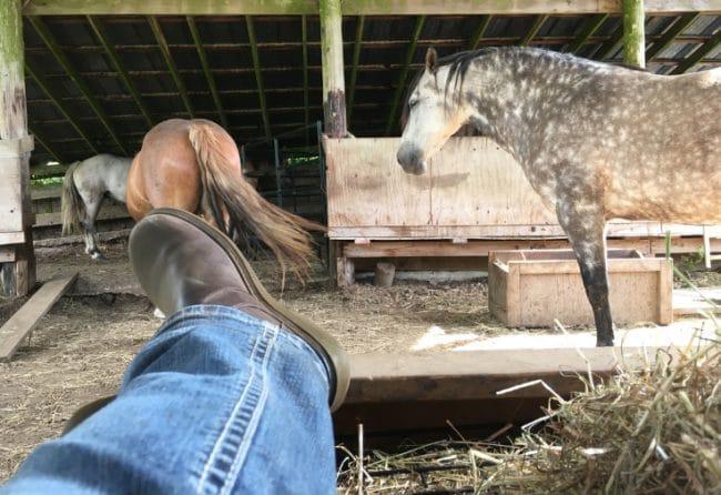 horses-meditate